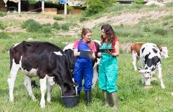 农场的兽医 免版税库存图片
