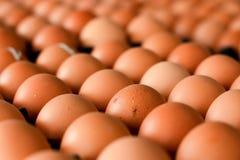 从农场的新鲜的鸡蛋 免版税库存照片