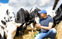 农场的牛仔农夫在牧群附近 免版税库存图片