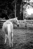 农场的马 免版税库存图片