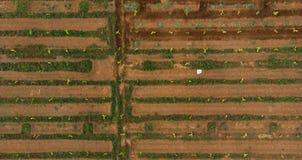 农场鸟瞰图有地面灌溉系统的 象一个人的狭窄的水路做了迷宫 免版税库存照片