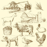 农场 库存图片