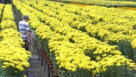 农夫为雏菊花园是有同情心的由水耕 库存图片