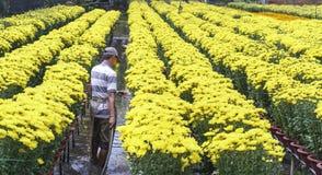 农夫为雏菊花园是有同情心的由水耕 库存照片