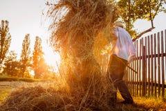 农夫人会集与干草叉的干草在日落在乡下 免版税库存照片