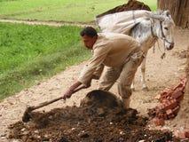 农夫人在收获种子的宰海卜回教 库存图片