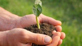 农夫人手拿着发芽的绿豆芽的地面 影视素材