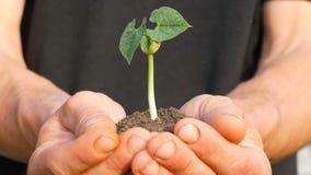 农夫人手拿着发芽的绿豆芽的地面 股票视频