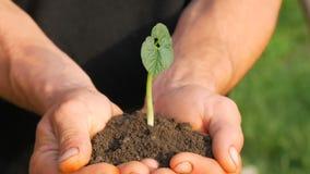 农夫人手拿着发芽的绿豆芽的地面 股票录像