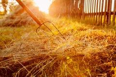 农夫会集与干草叉的干草在日落在乡下 库存图片