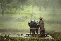 农夫使用水牛犁米为种植做准备  免版税库存照片