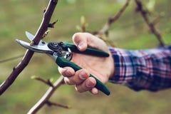 农夫修剪的果树在春天庭院里 免版税库存图片