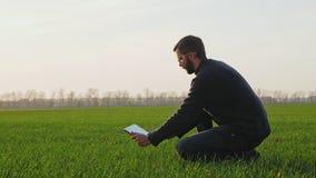 农夫做在一个冬麦领域的一张照片与一种数字片剂 股票视频