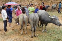农夫出售牛 免版税库存照片