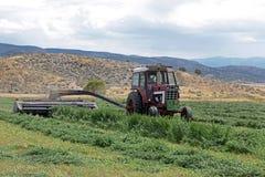 农夫剪切紫花苜蓿干草在夏天 库存照片
