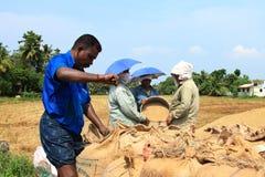农夫参与收获后的工作 免版税库存照片