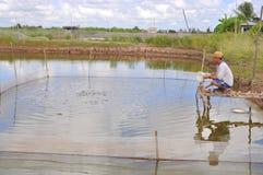 农夫喂养在他小的鱼拥有越南的湄公河三角洲的池塘 免版税库存图片