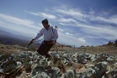 农夫喷洒的杀虫剂巴拿马 免版税图库摄影
