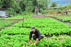 农夫在工作 免版税库存图片
