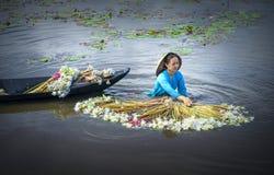 农夫在收获以后清洗百合在洪水季节的沼泽下 库存图片