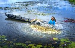 农夫在收获以后清洗百合在洪水季节的沼泽下 免版税图库摄影