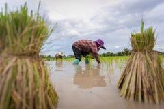 农夫在泰国 免版税库存图片