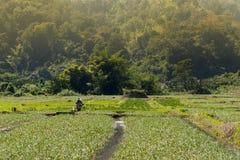 农夫在米的工作调遣, Pai泰国 库存图片