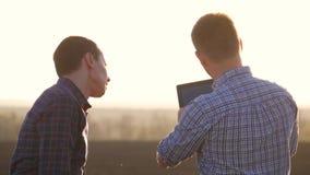 农夫在麦田工作,传达,看片剂 两位农夫在领域谈话,使用片剂 股票视频