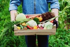 农夫在他的手上拿着有有机根菜和收获庄稼的一个木箱在庭院的背景的 库存照片