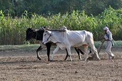 农夫域犁 免版税图库摄影