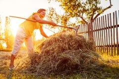 农夫妇女会集与干草叉的干草在日落在乡下 坚苦工作在村庄 图库摄影