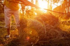 农夫妇女会集与干草叉的干草在日落在乡下 坚苦工作在村庄 库存照片