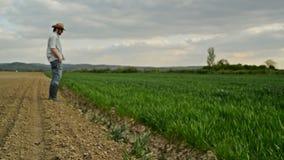 农夫审查并且控制年轻麦子耕种领域,庄稼保护概念 影视素材