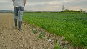 农夫审查并且控制年轻麦子耕种领域,庄稼保护概念 股票录像
