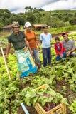 农夫家庭在甜菜种植园 库存照片