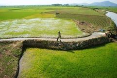 农夫对稻田的泵浦水 免版税库存图片