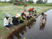 农夫展示如何种植莲花在准备的区域 免版税库存图片