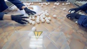 农夫工作者采取许多鸡蛋包装他们入纸板箱在工厂 股票视频