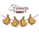 农夫市场香蕉 皇族释放例证