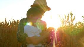 农夫愉快的家庭:在日落期间,愉快的妈妈和她的儿子领域的审查麦子的小尖峰 股票视频