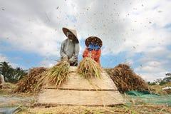 农夫打谷米,巴厘岛,印度尼西亚。 免版税库存图片