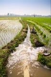 农夫投入了水对稻 免版税库存图片