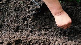 农夫投掷种子到地面在他的庭院里