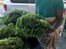 农夫拿着大卷心莴苣的市场农夫 库存图片