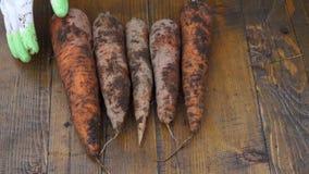 农夫拿着红萝卜、手和红萝卜一个生物产品沾染与地球 红萝卜特写镜头在手上 股票录像