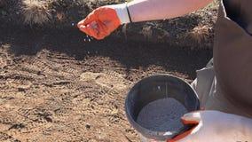 农夫拿着肥料化工粒子和倾吐在土壤的花匠手 影视素材