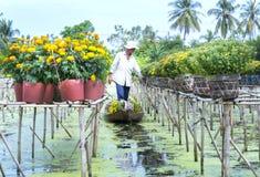 农夫收获雏菊和万寿菊在小船的花盆 库存图片