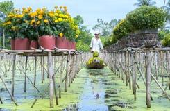 农夫收获雏菊和万寿菊在小船的花盆 免版税库存图片
