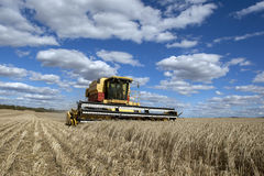 农夫收获麦子一个broadacre小牧场  免版税图库摄影