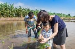 农夫教育幼儿园学生种植在稻田的米 库存图片